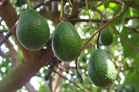 Avos on Tree 3-13