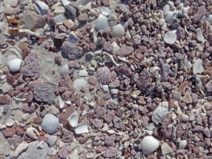 Seashells #215 2-14